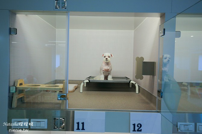 台中狗旅館-瑋特ㄚ狗生活館寵物房的房內設備