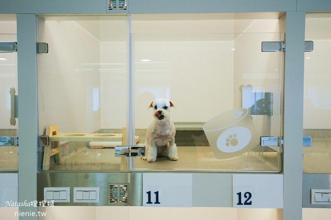 台中狗旅館-瑋特ㄚ狗生活館的寵物房是全透明設計