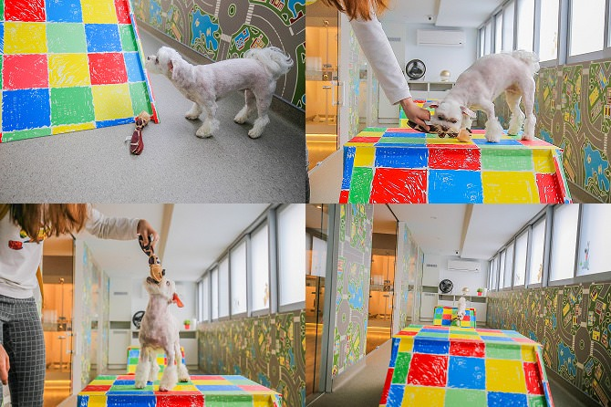 台中狗旅館-瑋特ㄚ狗生活館的寵物遊戲區