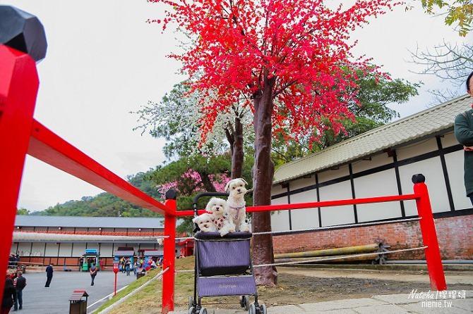 寵物旅遊│南投竹山新景點│桃太郎村~桃太郎故事背景的日式街景結合台灣復古建築114
