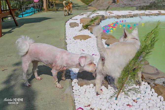寵物餐廳│寵物游泳│台南關廟美食│森呼吸 Jorona Park~充滿彩色球的寵物專屬游泳池及露天咖啡廳05