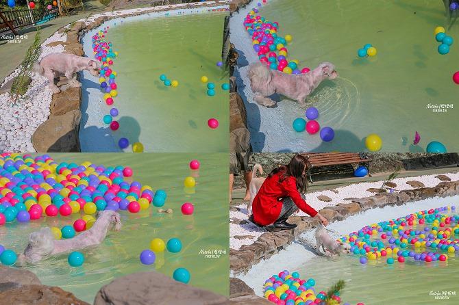 寵物餐廳│寵物游泳│台南關廟美食│森呼吸 Jorona Park~充滿彩色球的寵物專屬游泳池及露天咖啡廳111