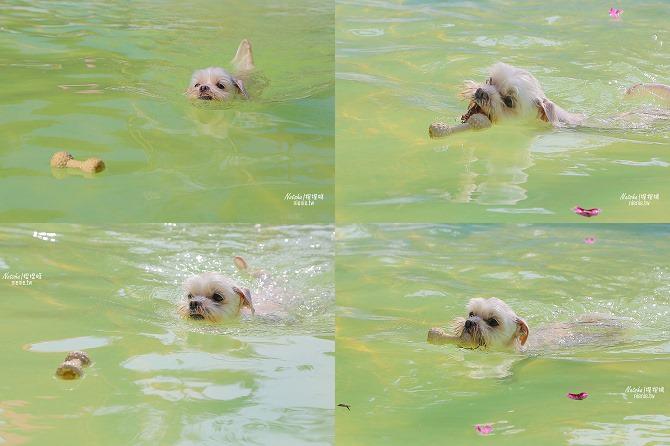 寵物餐廳│寵物游泳│台南關廟美食│森呼吸 Jorona Park~充滿彩色球的寵物專屬游泳池及露天咖啡廳112