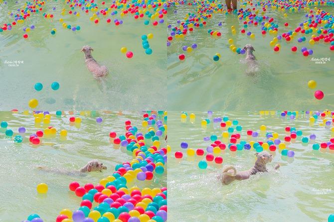 寵物餐廳│寵物游泳│台南關廟美食│森呼吸 Jorona Park~充滿彩色球的寵物專屬游泳池及露天咖啡廳114