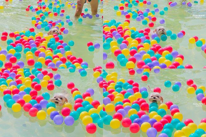 寵物餐廳│寵物游泳│台南關廟美食│森呼吸 Jorona Park~充滿彩色球的寵物專屬游泳池及露天咖啡廳115