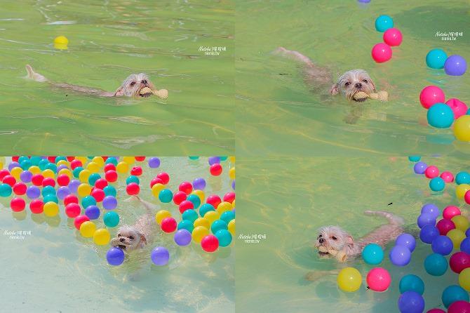 寵物餐廳│寵物游泳│台南關廟美食│森呼吸 Jorona Park~充滿彩色球的寵物專屬游泳池及露天咖啡廳117