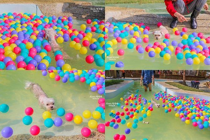 寵物餐廳│寵物游泳│台南關廟美食│森呼吸 Jorona Park~充滿彩色球的寵物專屬游泳池及露天咖啡廳118