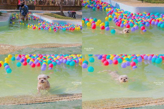 寵物餐廳│寵物游泳│台南關廟美食│森呼吸 Jorona Park~充滿彩色球的寵物專屬游泳池及露天咖啡廳119