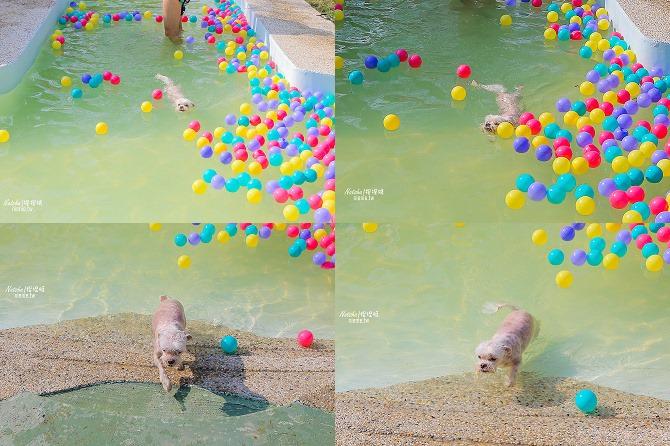寵物餐廳│寵物游泳│台南關廟美食│森呼吸 Jorona Park~充滿彩色球的寵物專屬游泳池及露天咖啡廳120