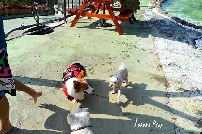 寵物餐廳│寵物游泳│台南關廟美食│森呼吸 Jorona Park~充滿彩色球的寵物專屬游泳池及露天咖啡廳123