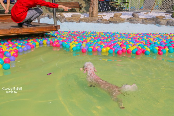 寵物餐廳│寵物游泳│台南關廟美食│森呼吸 Jorona Park~充滿彩色球的寵物專屬游泳池及露天咖啡廳19