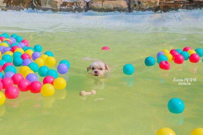 寵物餐廳│寵物游泳│台南關廟美食│森呼吸 Jorona Park~充滿彩色球的寵物專屬游泳池及露天咖啡廳23
