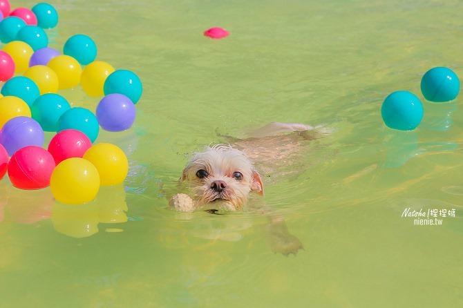 寵物餐廳│寵物游泳│台南關廟美食│森呼吸 Jorona Park~充滿彩色球的寵物專屬游泳池及露天咖啡廳24