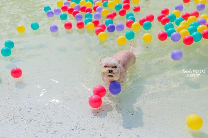寵物餐廳│寵物游泳│台南關廟美食│森呼吸 Jorona Park~充滿彩色球的寵物專屬游泳池及露天咖啡廳37