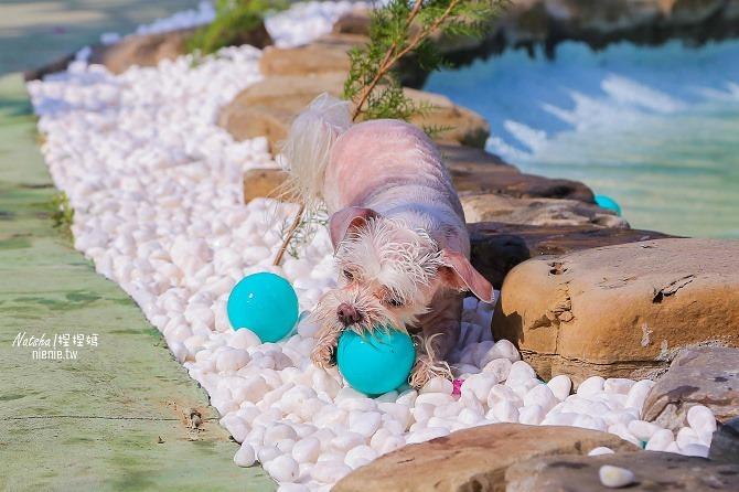 寵物餐廳│寵物游泳│台南關廟美食│森呼吸 Jorona Park~充滿彩色球的寵物專屬游泳池及露天咖啡廳47