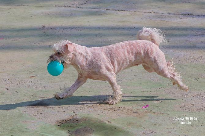 寵物餐廳│寵物游泳│台南關廟美食│森呼吸 Jorona Park~充滿彩色球的寵物專屬游泳池及露天咖啡廳48