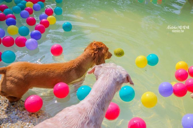 寵物餐廳│寵物游泳│台南關廟美食│森呼吸 Jorona Park~充滿彩色球的寵物專屬游泳池及露天咖啡廳59