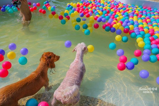 寵物餐廳│寵物游泳│台南關廟美食│森呼吸 Jorona Park~充滿彩色球的寵物專屬游泳池及露天咖啡廳60