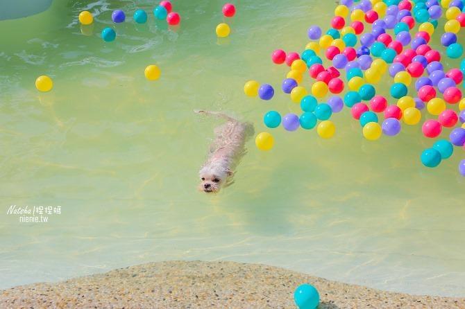 寵物餐廳│寵物游泳│台南關廟美食│森呼吸 Jorona Park~充滿彩色球的寵物專屬游泳池及露天咖啡廳75