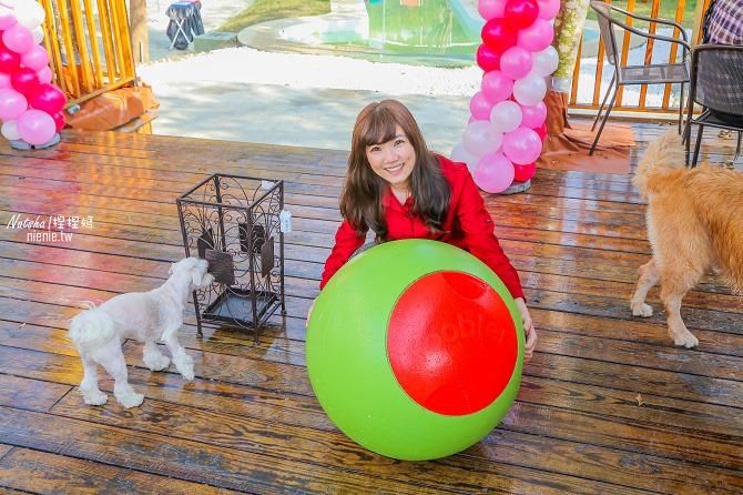 寵物餐廳│寵物游泳│台南關廟美食│森呼吸 Jorona Park~充滿彩色球的寵物專屬游泳池及露天咖啡廳88