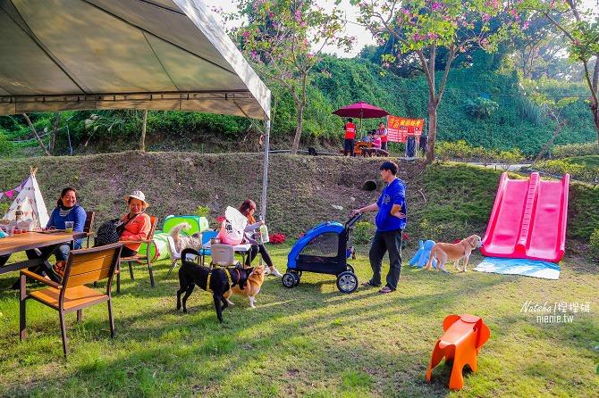 寵物餐廳│寵物游泳│台南關廟美食│森呼吸 Jorona Park~充滿彩色球的寵物專屬游泳池及露天咖啡廳91