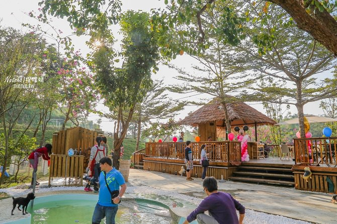 寵物餐廳│寵物游泳│台南關廟美食│森呼吸 Jorona Park~充滿彩色球的寵物專屬游泳池及露天咖啡廳94