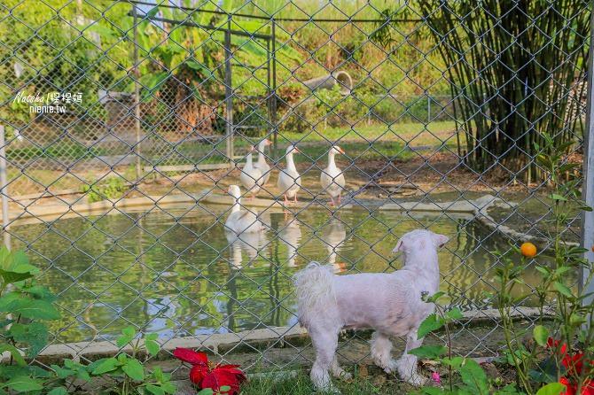 寵物餐廳│寵物游泳│台南關廟美食│森呼吸 Jorona Park~充滿彩色球的寵物專屬游泳池及露天咖啡廳99