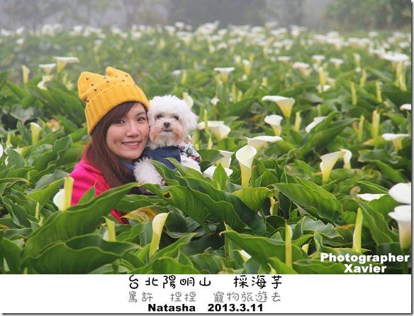 寵物旅遊│台北陽明山景點│竹子湖採海芋~罵許和捏捏終於一起登場了