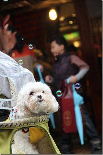 寵物旅遊│宜蘭五結景點│國立傳統藝術中心