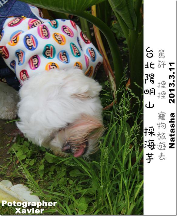 IMG_4413P10